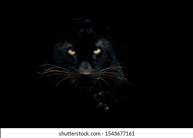 Zwarte panter met een zwarte achtergrond