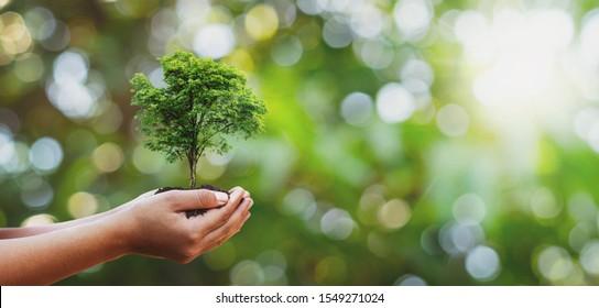 Plantación de árboles en manos de familias voluntarias para el concepto de campaña ecológica y de responsabilidad social corporativa