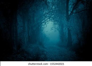 Geheimnisvoller, blau getönter Waldweg. Fußweg im dunklen, nebligen, herbstlichen, kalten Wald zwischen hohen Bäumen.