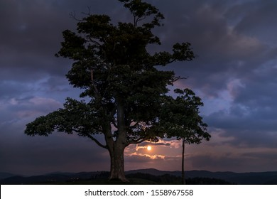 Moon rise abandoned tree on a hill at dark sunset with the rising moon in full moon over the horizon between nature and landscape overlooking dark moody clouds capture in high resolution.