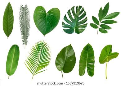 白い背景で隔離の熱帯の葉のセットです。