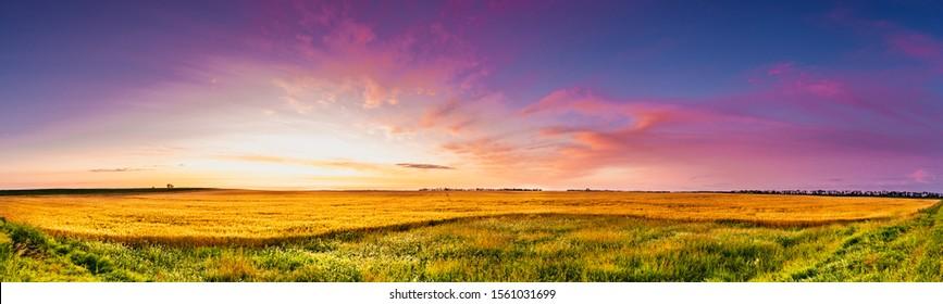 Amanecer panorámico sobre un campo de trigo de Dakota con cielo azul y magenta hierba verde y trigo dorado