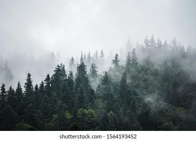 Brumoso paisaje de montaña brumosa con bosque de abetos y copyspace en estilo hipster retro vintage