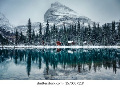 Wooden lodge in pine forest with heavy snow reflection on Lake O'hara at Yoho national park, Canada
