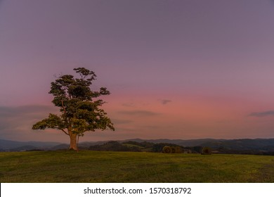 Árbol abandonado en una colina al atardecer oscuro con la luna creciente en luna llena sobre el horizonte entre la naturaleza y el paisaje con vistas a la captura de nubes oscuras y cambiantes en alta resolución.