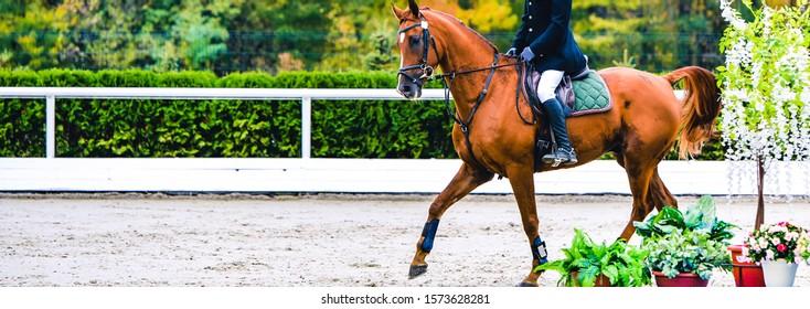 Pferd und Reiter in Uniform, die Sprung beim Springwettbewerb durchführen. Horizontales Banner des Pferdes für Website-Header-Design. Pferdesport Hintergrund. Selektiver Fokus.