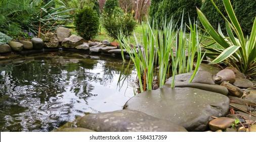 石の海岸と多くの装飾的な常緑樹のある美しい小さな庭の池は、雨の後に湧き出ます。セレクティブフォーカス。デザインのための自然の概念