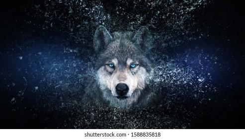 Wolf Tapete mit Zerfallseffekt,