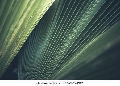 Greenery background, green color of nature plant and leaf environment greenery concept
