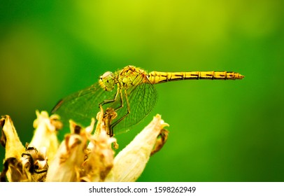 Dragonfly on flower macro view. Dragonfly profile. Dragonfly macro view. Dragonfly