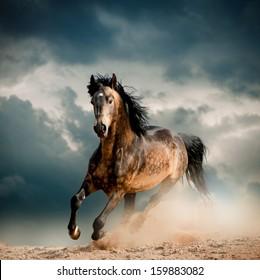 ほこりの野生の種馬