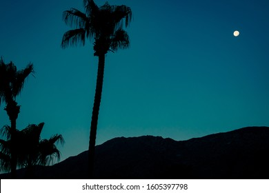 Palm Trees and Moon in the Desert at Night in California
