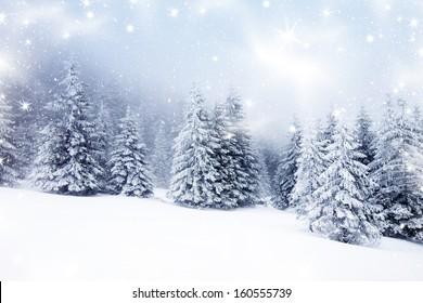 雪のモミの木とクリスマスの背景