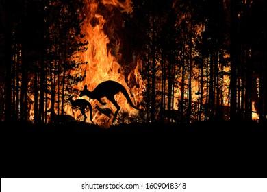 Bushfire IN Australia Forest Viele Kängurus und andere Tiere fliehen, um ihr Leben zu retten. Die Evakuierung zerstörte die Silhouette.