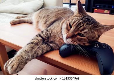 Cat bosanski video Online CAT