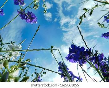 雲と青い空を見上げて、花畑からの眺め