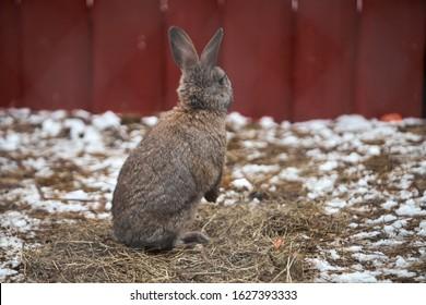 Kleines lustiges Kaninchen, das im Winter auf dem Feld läuft