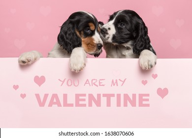 パステルピンクのボードの境界線にぶら下がっている2匹の抱きしめるコッカースパニエルの子犬とあなたが私のバレンタインであるテキストとバレンタインデーのグリーティングカード
