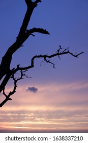 silhouette of a tree against a sunset pink and lilac sky