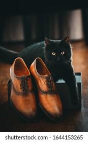 Schwarze kleine Katze, die im Schuhkarton sitzt