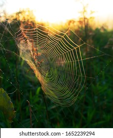 Spider and its web in the forest at background