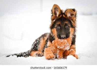 冬のぬいぐるみとジャーマンシェパードの子犬