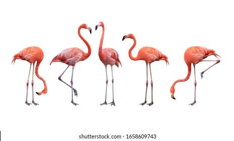 フラミンゴ鳥動物セットの写真は、白い背景で隔離。これにはクリッピングパスがあります。