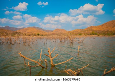 Dry trees and tree branches are dead in the middle of lake  and beautiful mountain with dramatic clouds. Natural view of little dead trees in the reservoir. Beautiful view of dried trees in the lake.