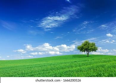 Idyllisch landschap, eenzame boom tussen groene velden, blauwe lucht en witte wolken op de achtergrond