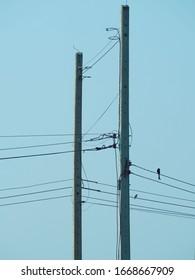 電柱2の植物に止まった2羽の鳥