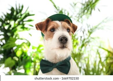 Jack Russell Terrier mit Koboldhut und Fliege im Freien. St. Patrick's Day