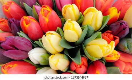 Tulipanes de primavera ramo de tulipanes florales
