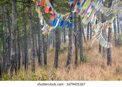 Strings of Prayer Flags Hanging from the trees in a Pine Forest on a hillside.