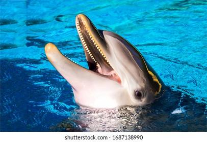 イルカは水中で微笑む。水中のイルカ。イルカの頭。イルカの笑顔