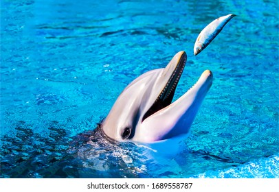 イルカは水中で魚を食べます。水中のイルカ。水中でイルカの笑顔