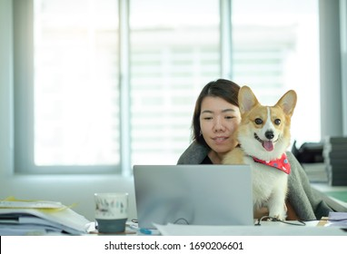 Female employees work at home due to covid-19 virus problems with Corgi dogs.Internet teleconferencing Of the team that works at home
