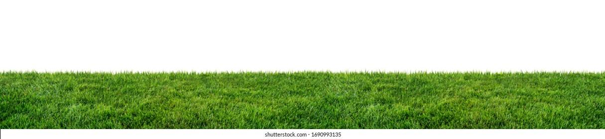 campo de hierba verde aislado sobre fondo blanco
