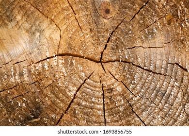 年輪は、切り取った丸太の断面で古い風化した木の質感を帯びています。