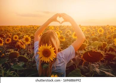 la niña del campo con girasoles cruzó las manos como un corazón. hombre en la naturaleza a la luz del atardecer.
