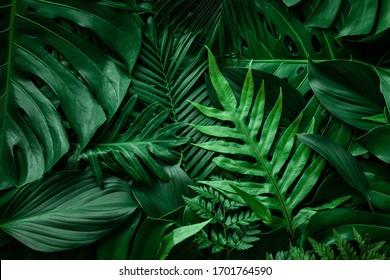 緑の葉とヤシの背景のクローズアップ自然ビュー。フラットレイ、暗い自然の概念、熱帯の葉