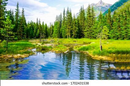 山の森の池の水の風景。山の森の池。山林池ビュー
