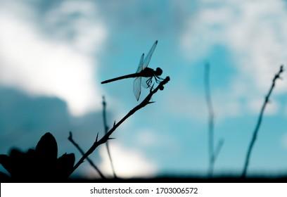 dradonfly silhouette and blue sky