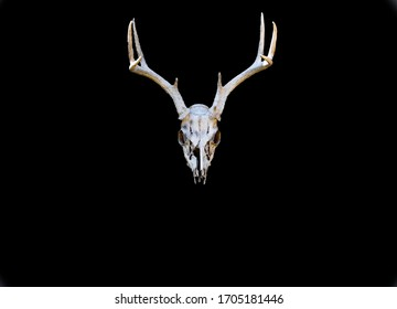 Deer skull for background uses.