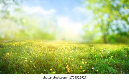 Schönes Wiesenfeld mit frischem Gras und gelben Löwenzahnblumen in der Natur gegen einen verschwommenen blauen Himmel mit Wolken. Sommer Frühling perfekte Naturlandschaft.