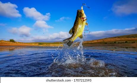 オオクチバス-夜明け、日の出の青い空と湖での釣り