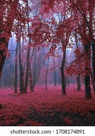 Bosque de niebla mística en colores rosados