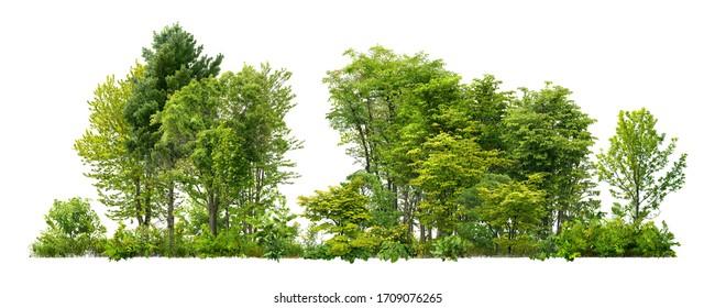 Grüne Bäume lokalisiert auf weißem Hintergrund. Wald und Laub im Sommer. Reihe von Bäumen und Sträuchern.
