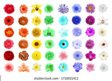 白い背景の上のさまざまな美しい花のセット