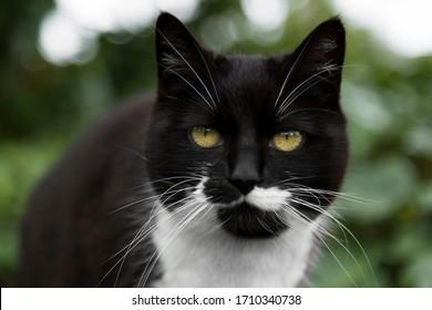 Gato blanco y negro con ojos verdes mira a la cámara.