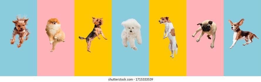 若い犬はジャンプ、遊んで、飛んでいます。かわいいわんわんやペットは、カラフルなまたはグラデーションの背景に孤立して幸せそうに見えます。スタジオ。さまざまな品種の犬のクリエイティブなコラージュ。広告のチラシ。
